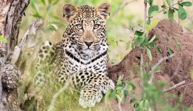 The Big Five: Wie, Wat En Waar? (in Zuid-Afrika!)